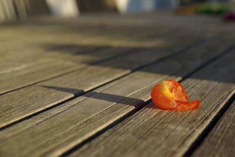 Tomat i släpljus
